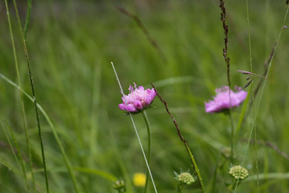 Blumen auf dem Stubeck